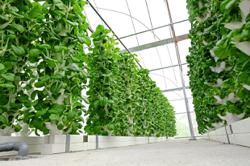 Turn empty spaces into urban farms to grow food
