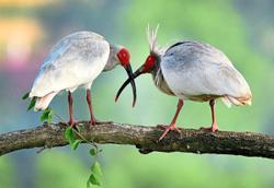 Endangered birds begin to rebuild their populations