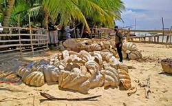 Giant clam shells worth US$24.8 million seized in Philippine raid