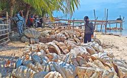 Giant clam shells seized