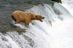 Guide to bear watching in North America
