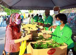 Plant your veggies to save money