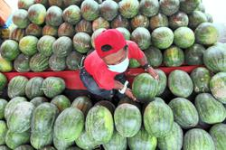 Watermelon is 'king of fruits' during fasting month