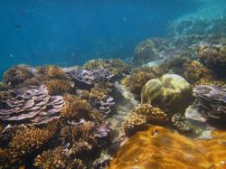Malaysia's coral reefs in 'fair condition', needs stronger local management