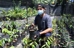 Sabahan grows lucrative business from durian seeds