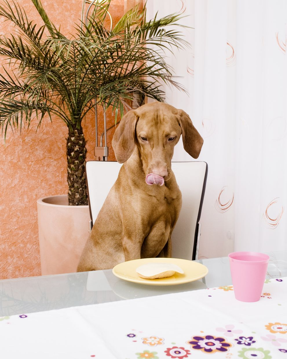 Not everything that your dog will eat is good for them. Photo: dpa