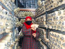Down Syndrome association to generate income through cultivation of mushrooms