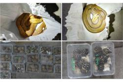 Man nabbed over smuggling of exotic animals worth over RM60,000