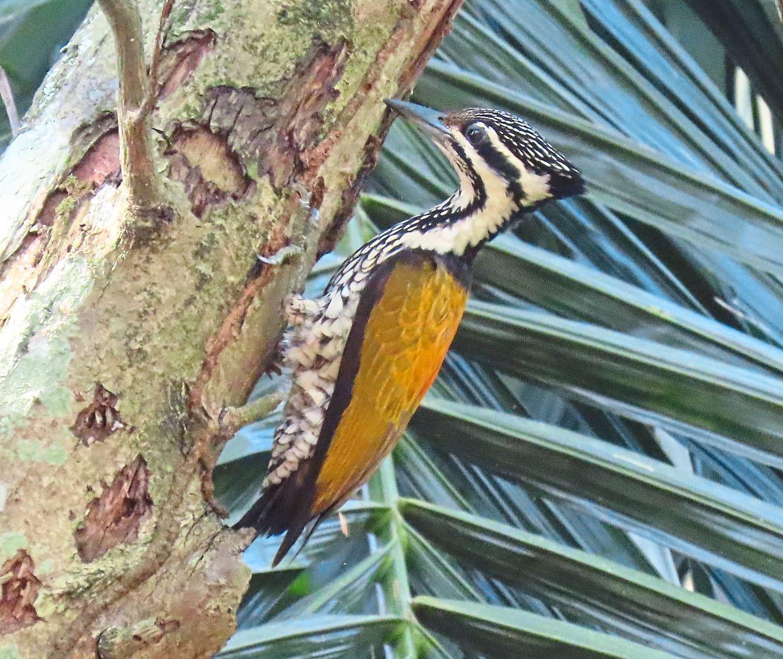 Fruitful bird-watching trips in the city