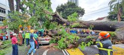 Driver crushed by falling tree