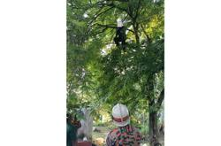 Man rescued from trying to kill himself on tree