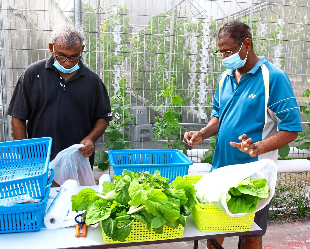 Chandran (left) and Mahendran  are retired  professional landscapers who are now caretakers of Kebun By Amboi.