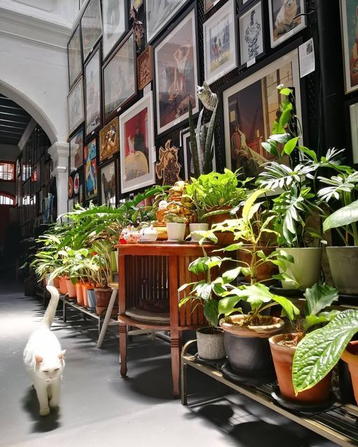 Meowseum comes alive the most when there's a midnoon sun coming through the tall skylight bathing the art, plants and the occasional cat. Photo: Meowseum Penang