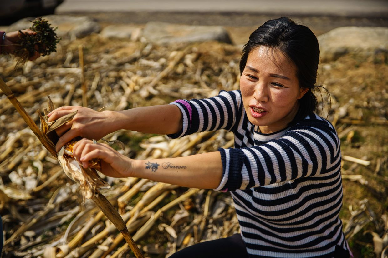 Seok Hyeon Ju finds a leftover cob of corn and documents it for her YouTube channel, in Inje, South Korea.