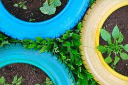NGO educates public on sustainable green practices