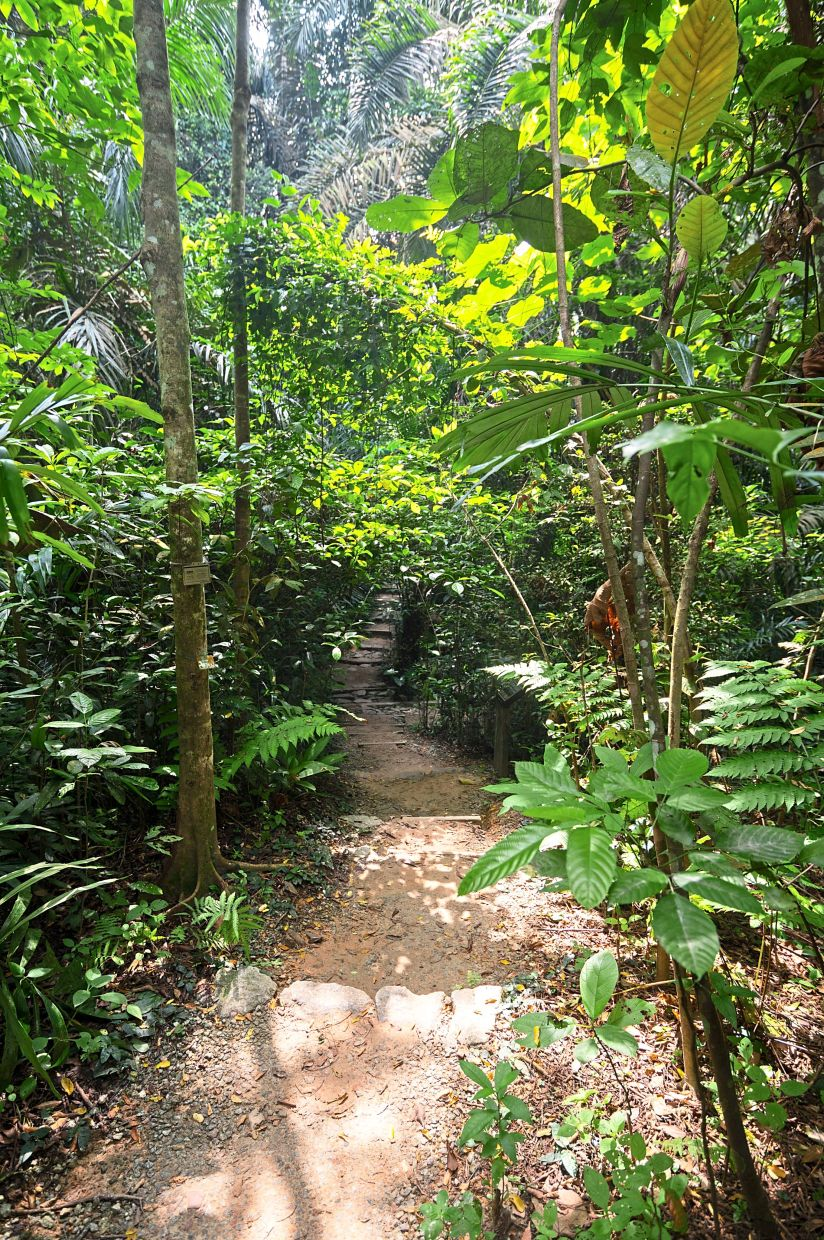 Taman Tugu trails are suitable for beginners and families.