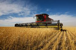 China-Australia relations: farmer laments 'mistake' of depending solely on Chinese market as supply chains shift