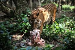 Maqis hands over almost 10 tonnes of seized frozen meat to Zoo Negara