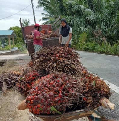 Palm oil prices rally to a new high, benchmark above RM4,400 a tonne