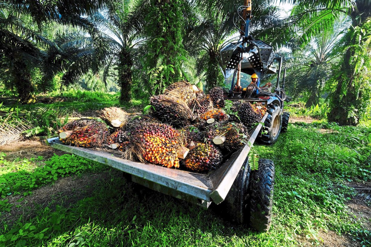 On uptrend: Oil palm companies have been enjoying prices that are north of RM4,000 a tonne for some time. — Bloomberg