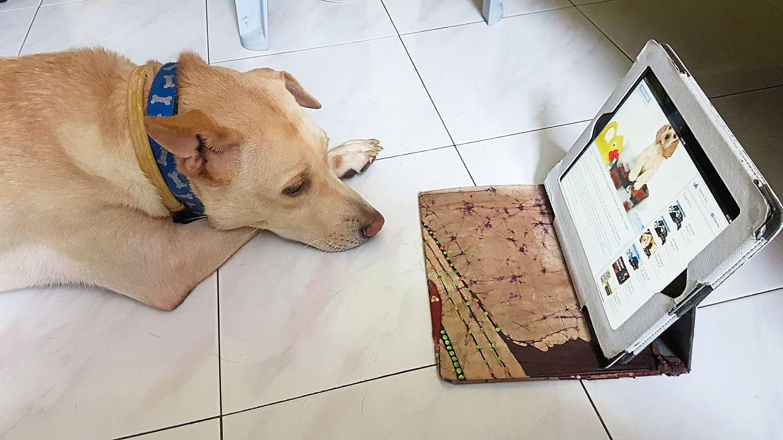 Tingku enjoys his leisure time online. Photo: N. Sarla Devi