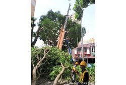 Council committed to maintaining trees