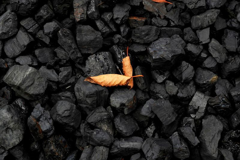 FILE PHOTO: A leaf sits on top of a pile of coal in Youngstown, Ohio, U.S., September 30, 2020. REUTERS/Shannon Stapleton/