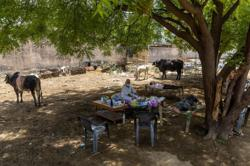 Under a tree, one Indian village cares for its COVID-19 sick