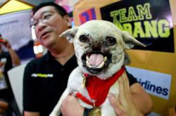Philippine hero dog who saved girls from being hit by bike dies at 13