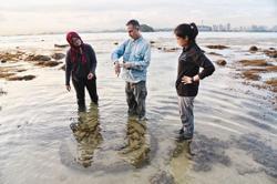 Coast protection study begins