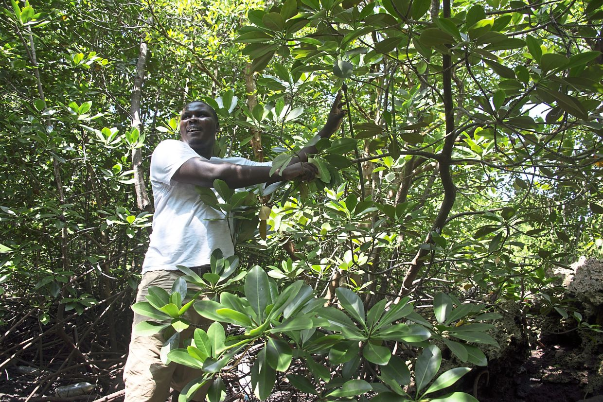 Mangroves can store carbon, helping to counter climate change. Kenya's Mikoko Pamoja project seeks to protect the country's precious coastal forests.