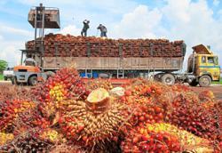 CPO to trade lower next week amid slowdown in demand post-festive season