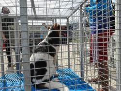 Dog Talk: This animal shelter recently moved over 300 cats and dogs