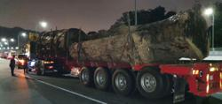 Pahang Forestry Dept: Lorry spotted with timber on East Coast Expressway had permit