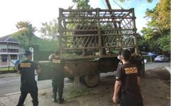 Four elephants get new home at elephant sanctuary in Sabah