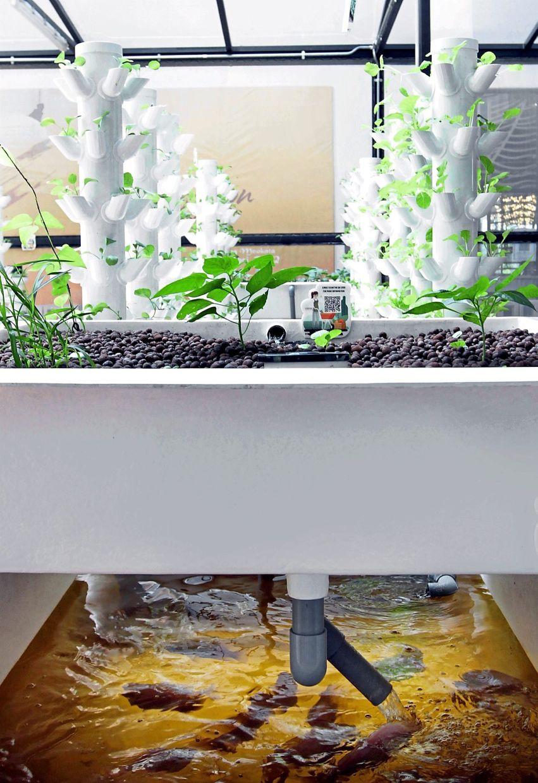 Havva's urban farming techniques include hydroponics, aeroponics, vermiponics, vertical farming and aquaculture.
