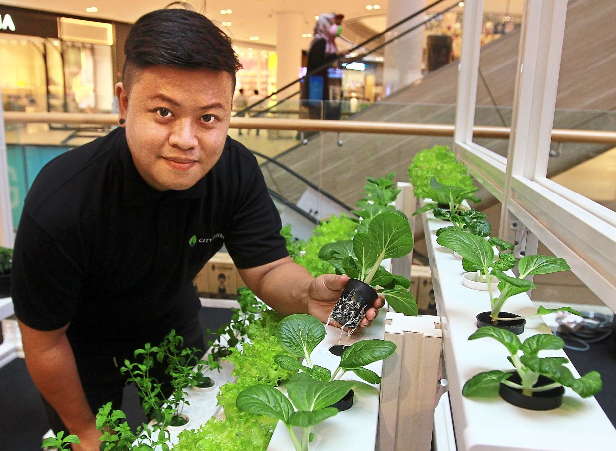 Koay showing how hydroponic  farming works at the urban  farming festival.