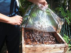 Collaboration drives home importance of bees, honey