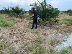 Skull, bone pieces found in Teluk Intan palm oil estate, cops looking for next-of-kin
