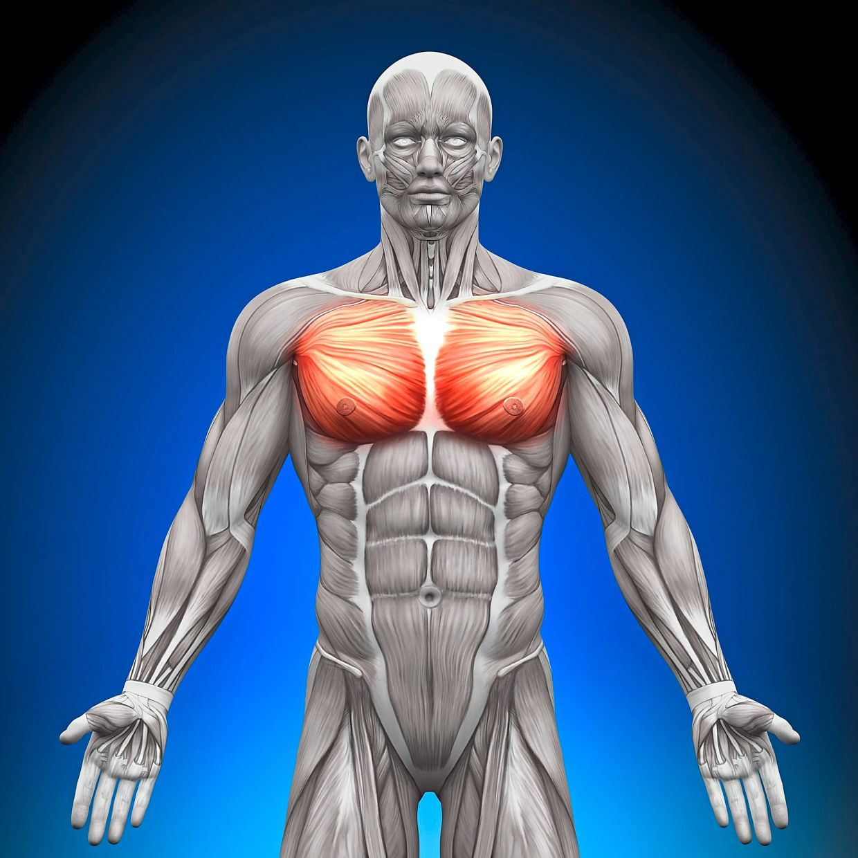The pectoral muscles are one of the two parts of the body men are most concerned about, according to a study. The other is their forearms.