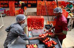 India's Tata buys majority stake in online grocer BigBasket