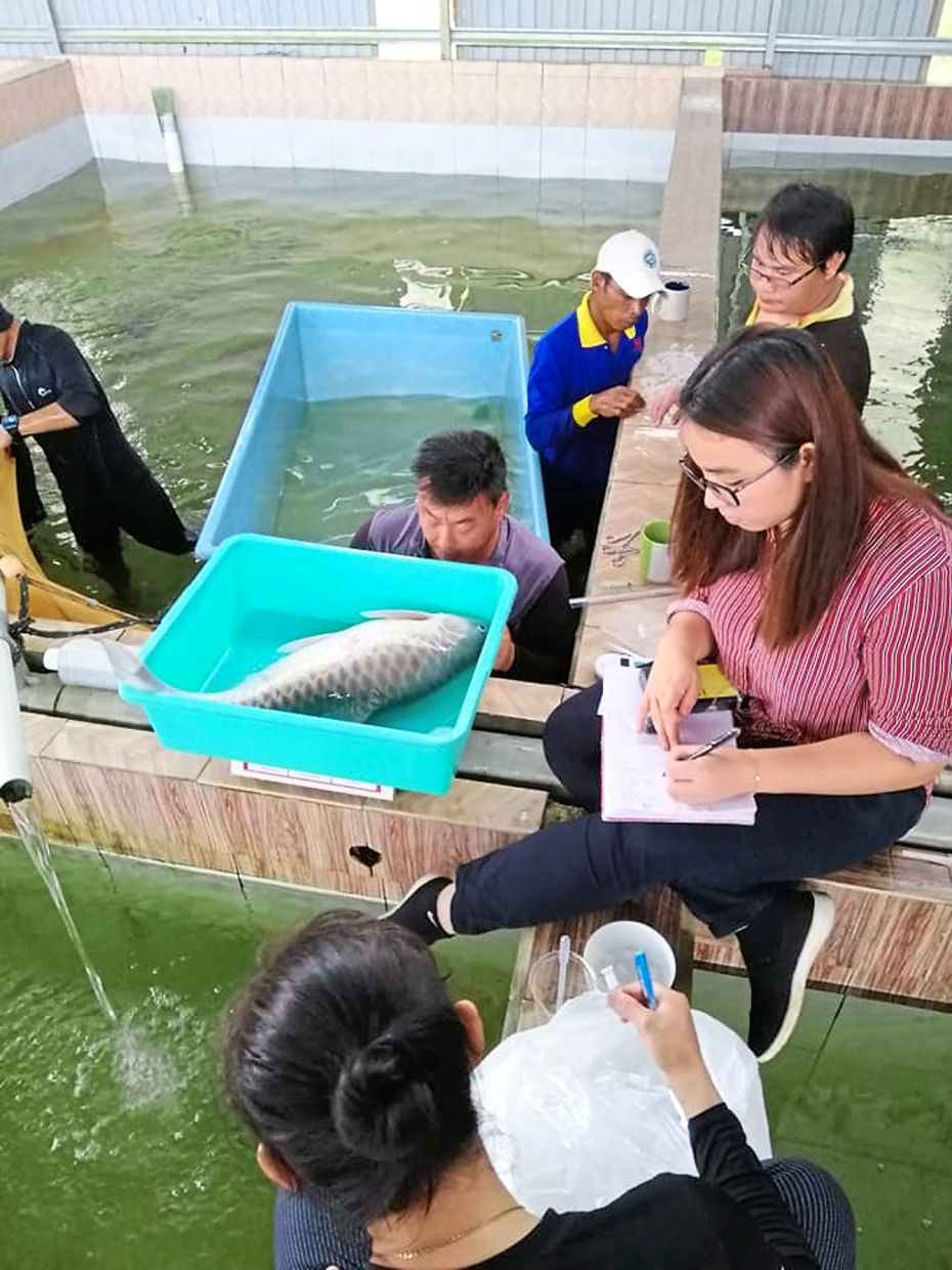 Employees tagging an empurau fish at the at the research and training facility in Tarat.
