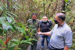 Tambunan's Gunung Alab offers a 'lung-cleansing' experience for tourists