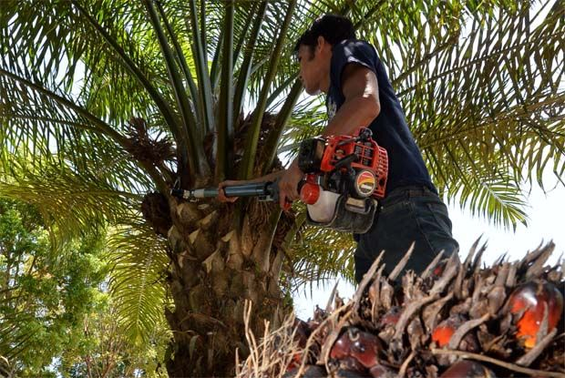 But for some 650,000 smallholders and stakeholders of the oil palm industry, the surging price of CPO must feel like the lifting of a siege. They must have celebrated.