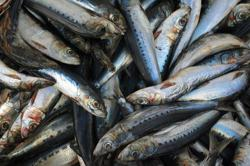 US bans imports from Chinese fishing fleet over forced labour allegations
