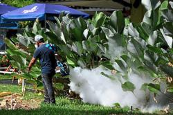 Dengue cases to rise as mosquito population swells