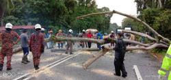 Senior citizen killed by falling tree in Tanjung Malim