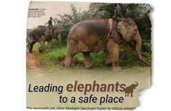 Planting a solution to human-elephant conflict