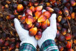 Indonesia yet to decide on whether to revise palm oil export levy, say officials