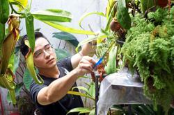 Indoor plant sales growing